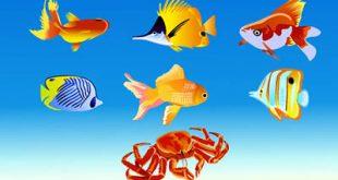 4photoshopir-Goldfish-vector-pack2-وکتور ماهی قرمز پک2