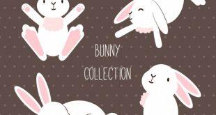 4photoshopir-bunnies-pack2-وکتور خرگوش پک2
