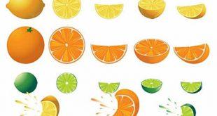4photoshopir-lemon-pack2-وکتور لیمو پک2