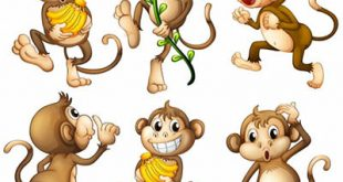 4photoshopir-monkey-vector-pack2-وکتور میمون پک2