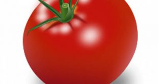 4photoshopir-tomato-pack1-وکتور گوجه پک1